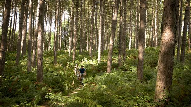 Sherwood Pines