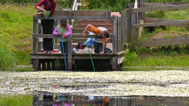 Pond dipping at Shropshire Hills Discovery Centre