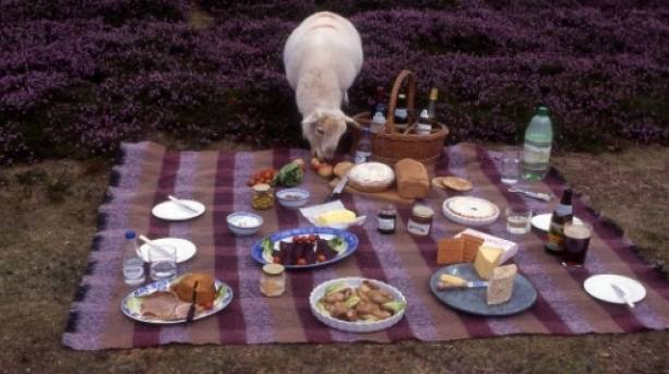 Picnic on the Long Mynd - just mind the sheep!