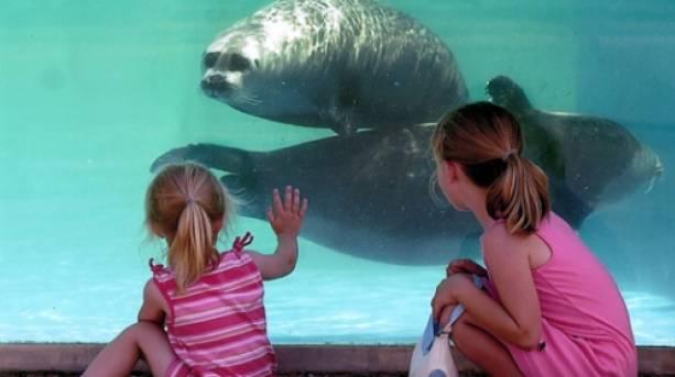 Children watching seals at Natureland Seal Sanctuary