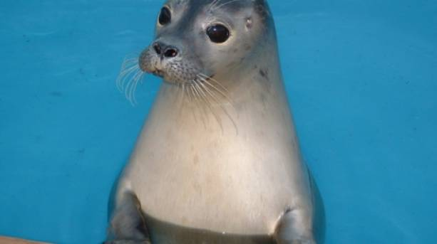 A seal at Natureland Seal Sanctuary