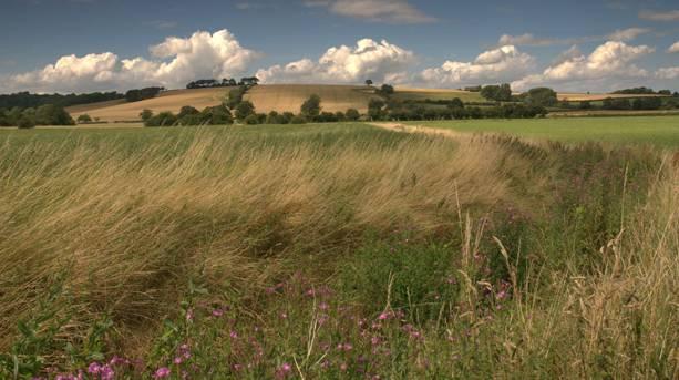 Somersby field