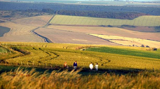 Photo of walkers on the South Downs