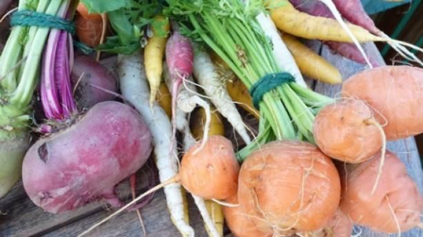 Apley Walled Garden vegetable box