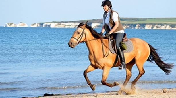 Horse riding on Studland Beach