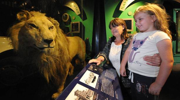 Inside with Wallace the lion