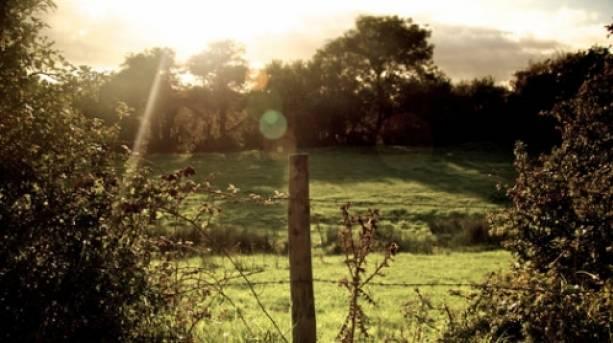 Countryside near Harman's Cross, Dorset