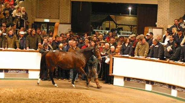 A horse being led around at Tattersalls Auction House