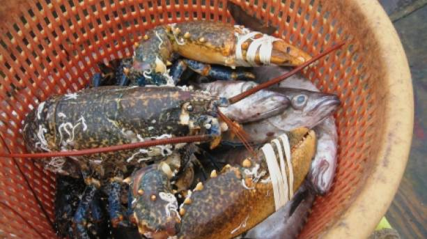 Catch of the day at the Tresco and Bryher Food Festival