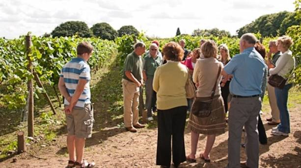 The National Forest & Beyond - Sealwood Vineyard tour