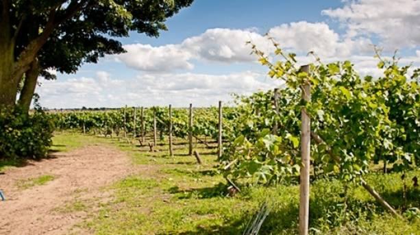 The National Forest & Beyond - Sealwood Vineyard, vines