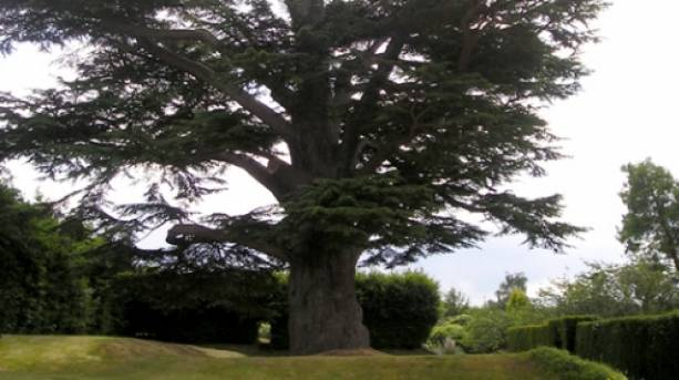 One of the various types of tree on display at the gardens