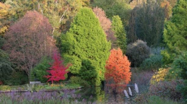 All the glorious colours of the tree