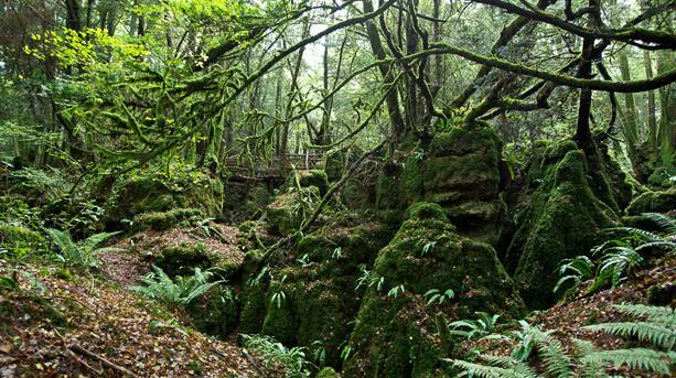 Outside of Camp Uk-filming-locations-puzzlewood-forest-of-dean