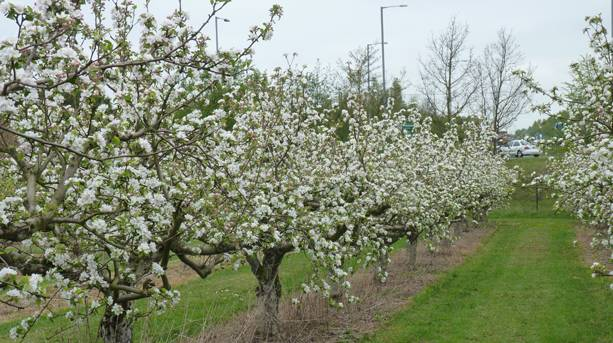 Worcestershire's Spring Blossom Trail