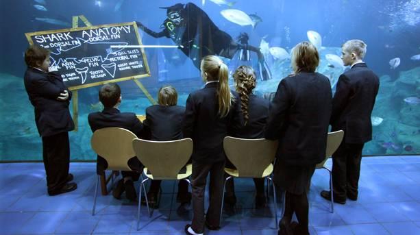 Underwater Classroom at the National Marine Aquarium