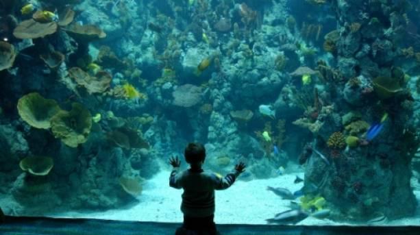 Family fun at The Deep, Hull