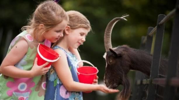 Feeding the animals at Staunton Farm