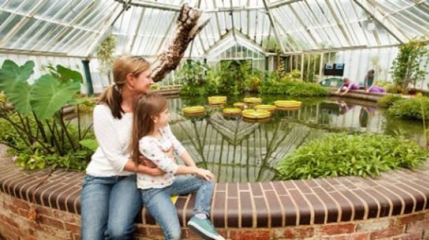 Rainforest experience in the glasshouse at Staunton