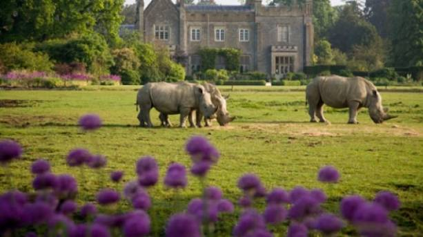 Rhino at Cotswold Wildlife Park