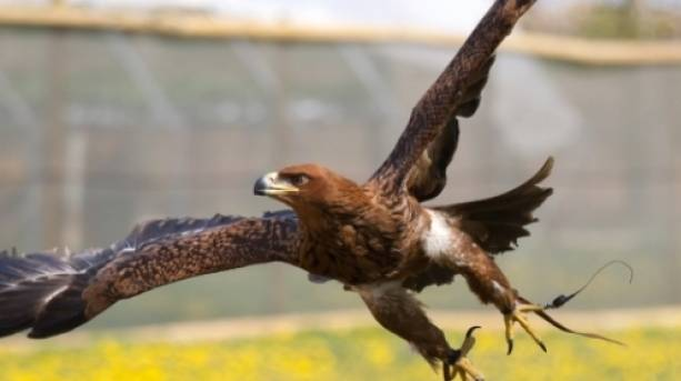See magnificent birds of prey in action
