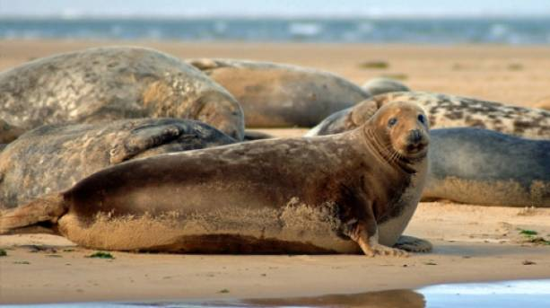 Take a Sea Tour and visit the seals