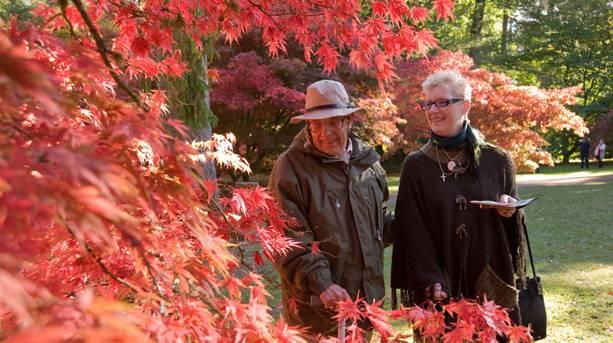 Autumn at Westonbirt Arboretum