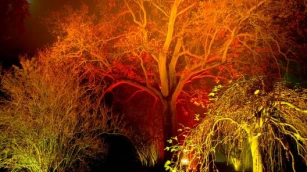 Enchanted Christmas at Westonbirt