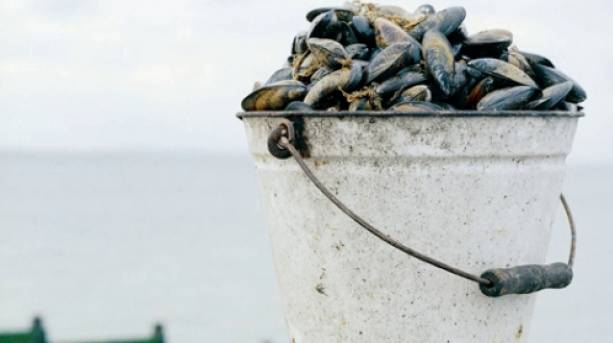 Whitstable Mussels