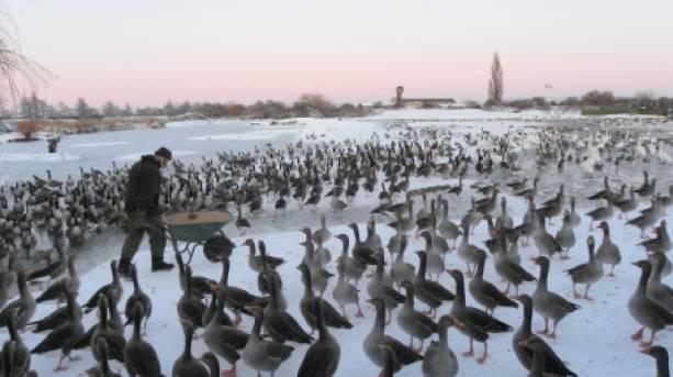 WWT Martin Mere Wetlands Centre