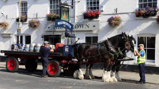 Meet the Wadworth horses