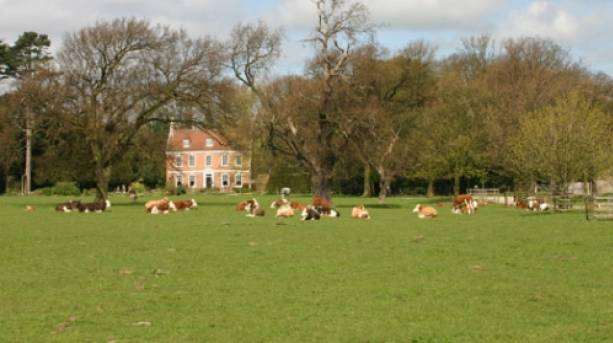 Animals grazing outside Brackenborough Hall Coach House in Lincolnshire