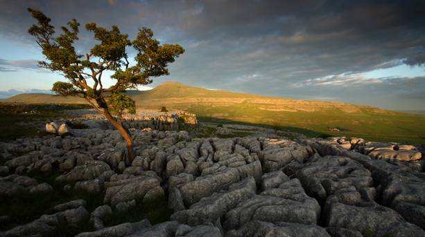 Evening light on Ingleborough