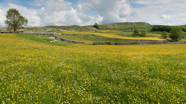 Hay meadows in Ribblesdale
