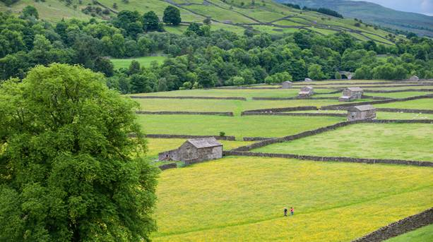 Walking through the meadows of Swaledale