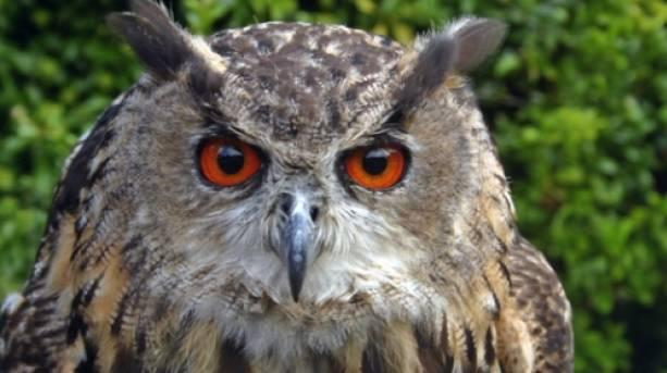 An owl at Thorpe Perrow