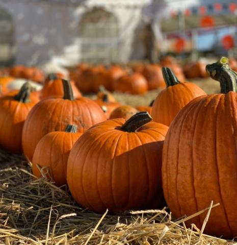 Row of orange pumpkins on ground