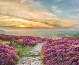 North York Moors blooming with heather