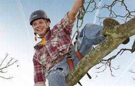 Climb trees in the Sussex countryside