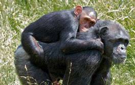 Make friends at Monkey World Ape Rescue Centre