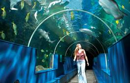 Have a sea adventure without getting wet at Oceanarium