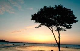 Isla de Brownsea