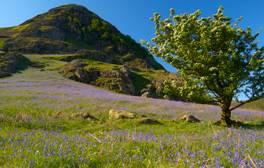 Campez au milieu des jacinthes des bois dans le Lake District