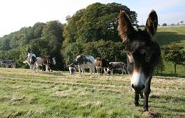 Meet the residents of The Donkey Sanctuary in Sidmouth