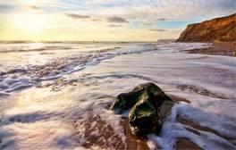 Discover dinosaur footprints on the beach