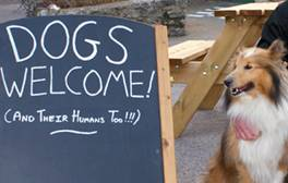 Take the family pet along on a dog friendly break in Dorset