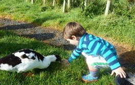 Keep the family entertained all day long at Pollaughan Farm
