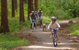 Spot the wildlife on a family bike ride in Hamsterley Forest