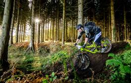 Fly or freewheel through the trees in the Forest of Dean