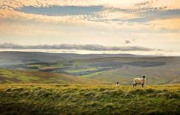Try 'Wolf Pie' on a tasty food trail in the Durham Dales
